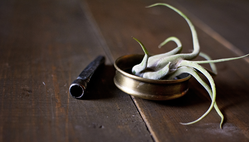 Chillum + Air Plant