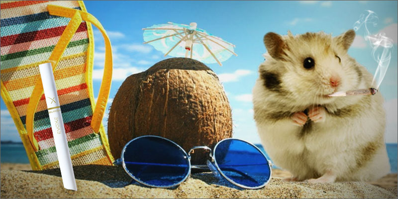 herbco-cover-image-kristen-williams-designs-summer-essentials-evoxe-smoking-hamster-joint