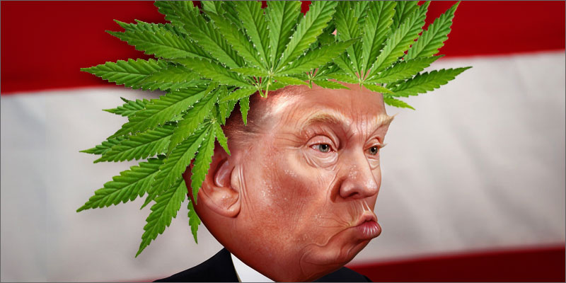 herbco-cover-image-kristen-williams-designs-trump-cannabis-hair