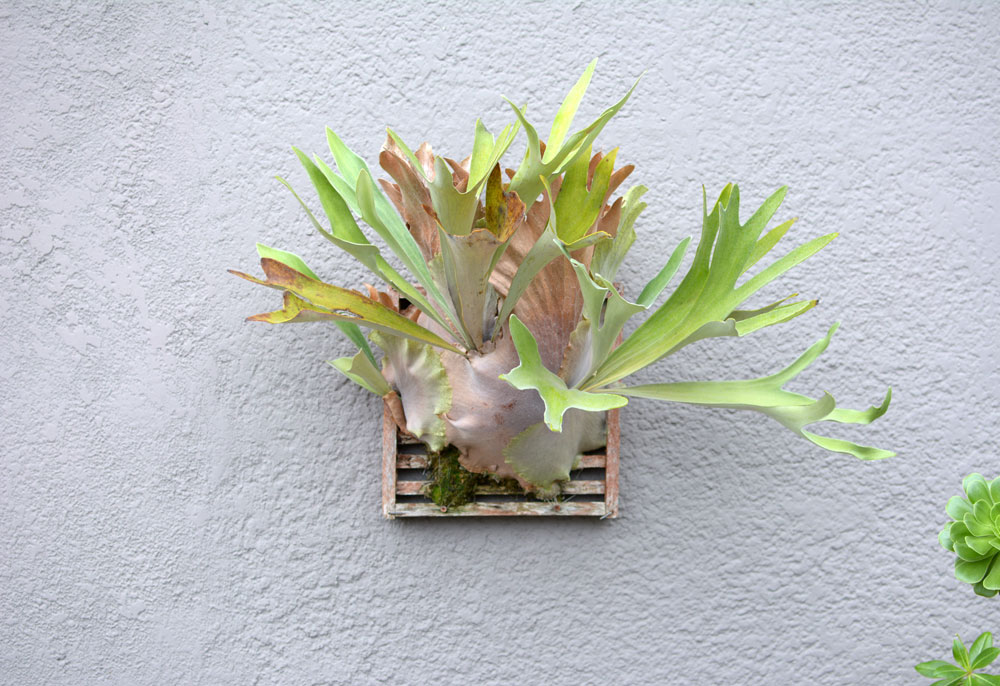 wall-plant-kristen-williams-designs
