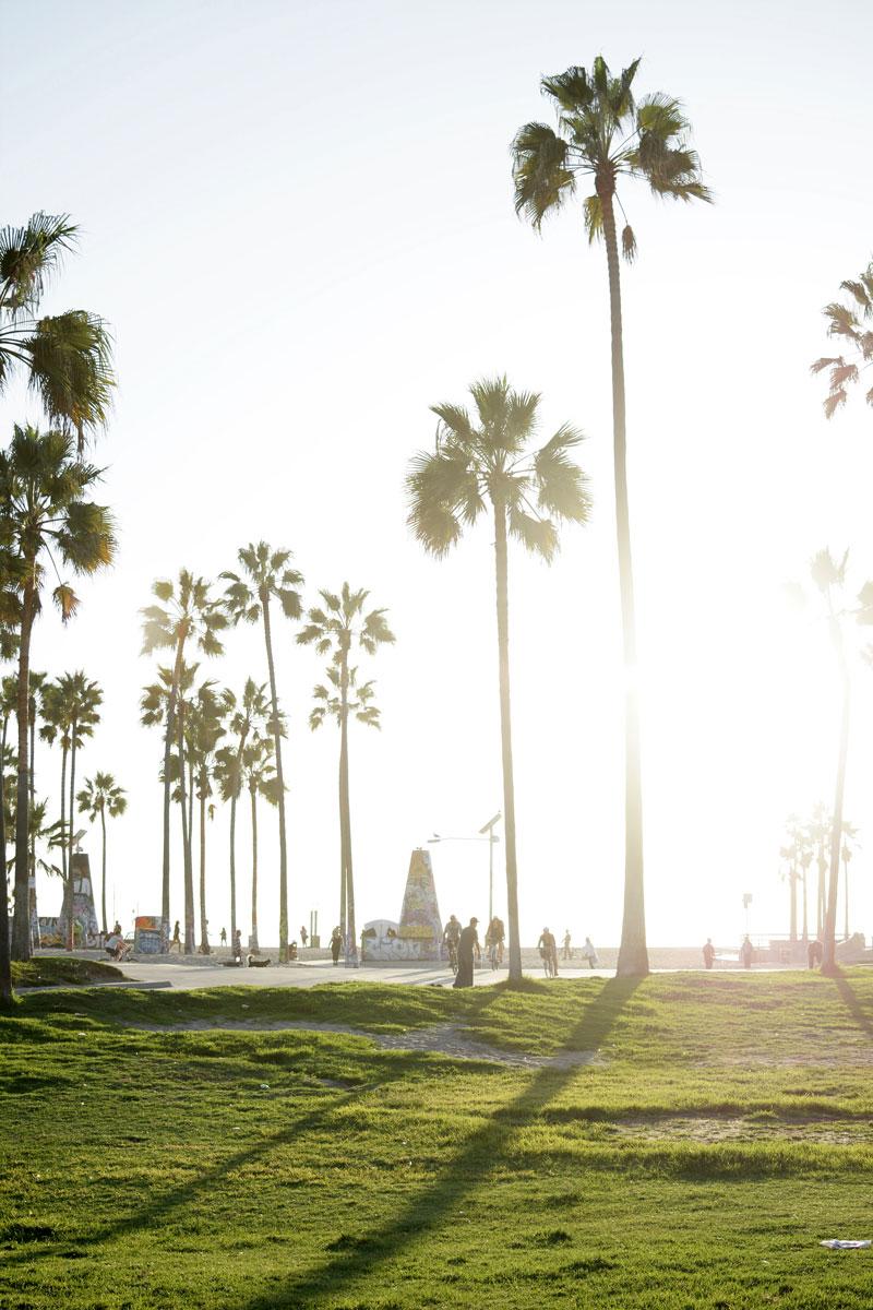 venice-beach-palm-trees-engage-evoxe.jpg