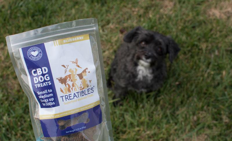 treatibles-cbd-dog-treats-yorkipoo-kristen-williams-designs