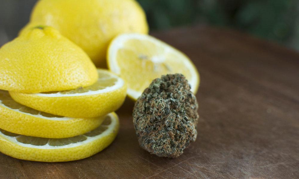 lemonlarry-2-DRH.jpg