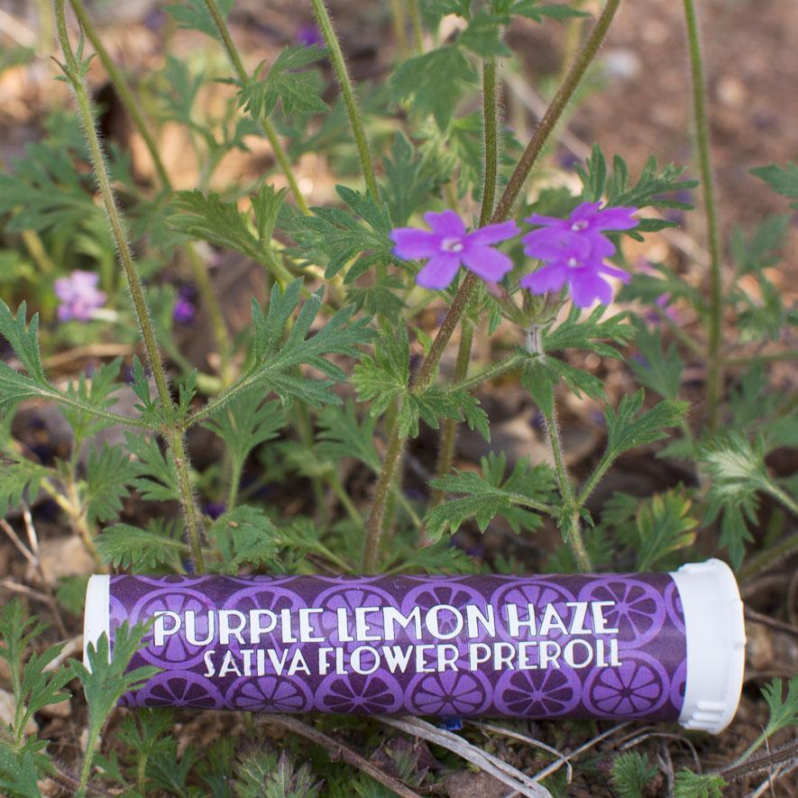 purple-lemonhaze-flowers-deeprootsharvest.jpg