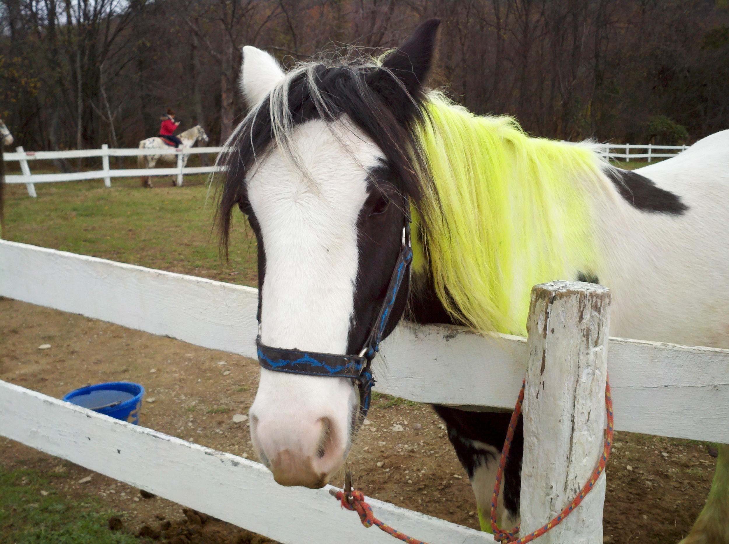blogging-tips-horse-example