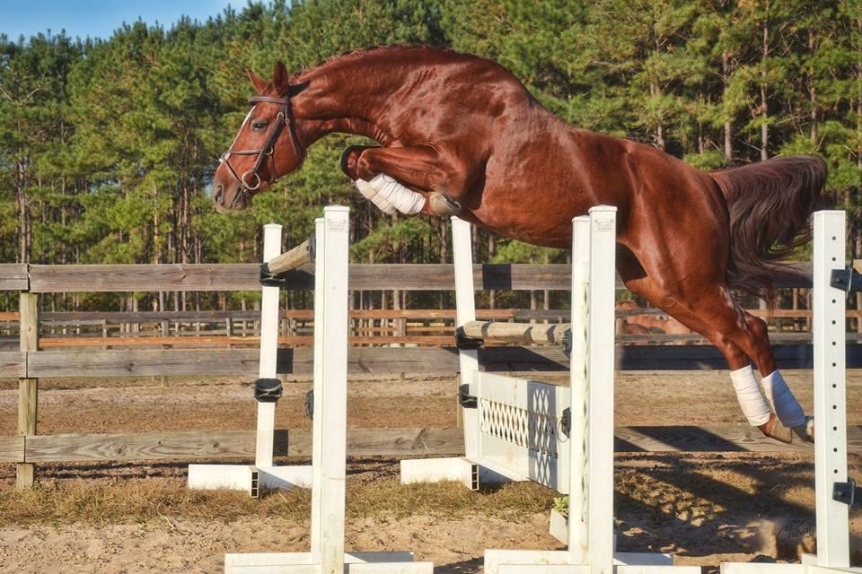edarco free jump.jpg
