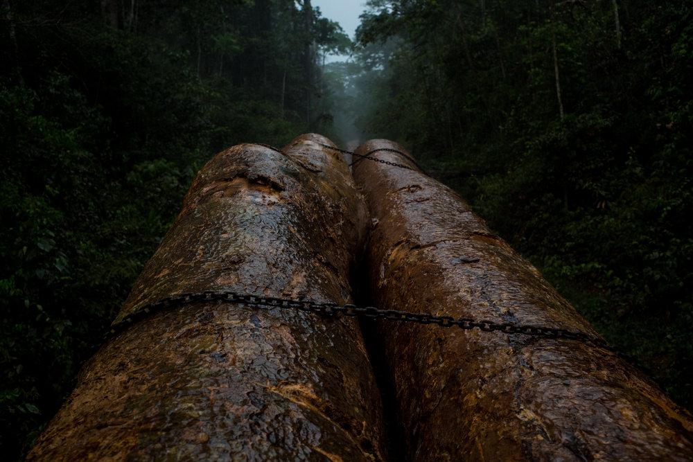 Jungle Logging Truck Top.jpg