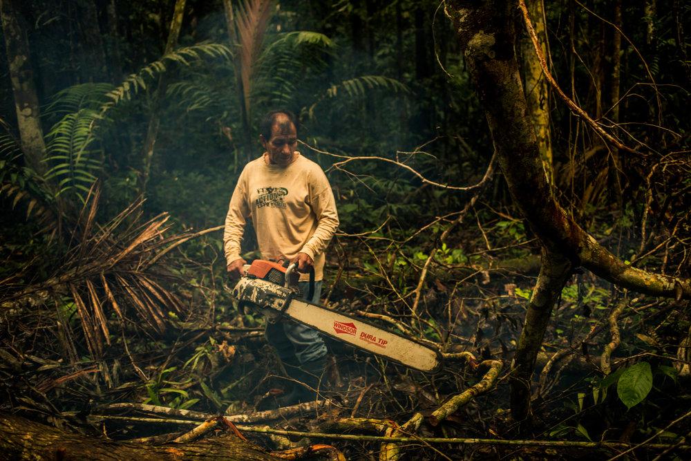 Alejo Logging.jpg