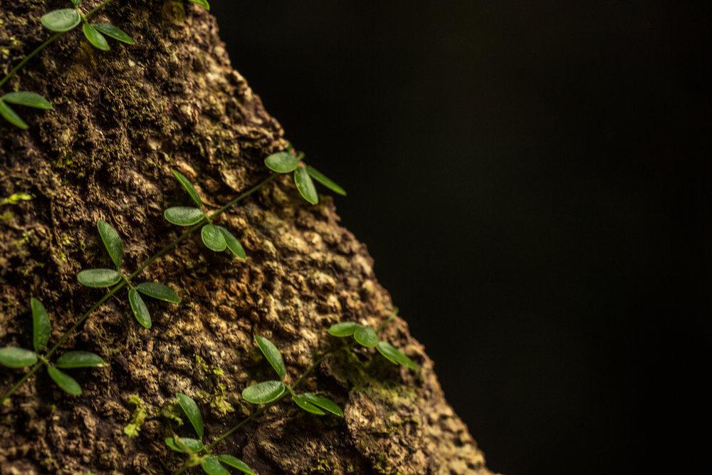 Delicate Plants.jpg