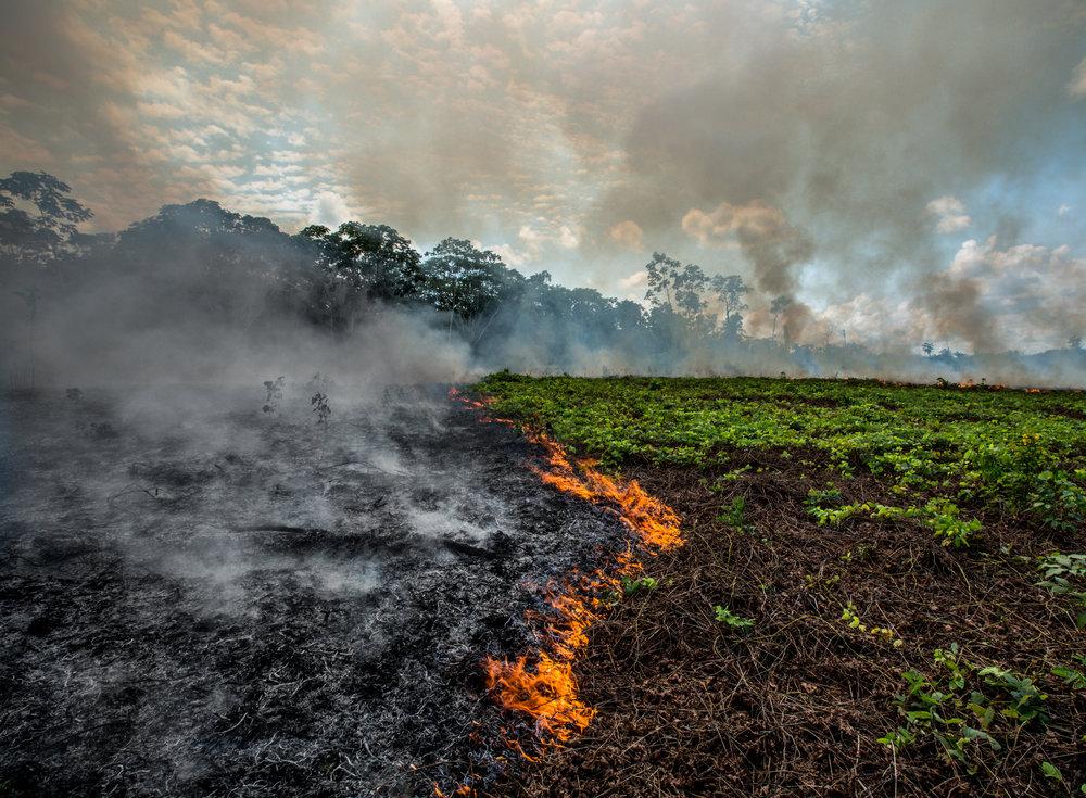 Burning Field.jpg