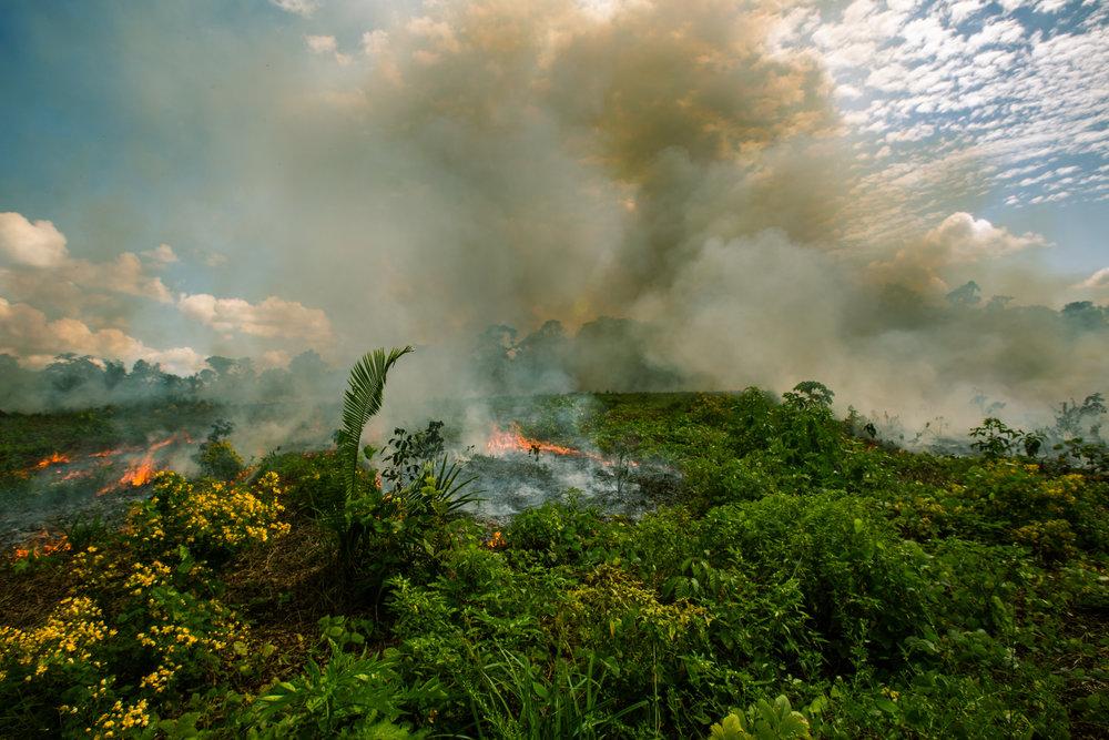 Burningforest.jpg