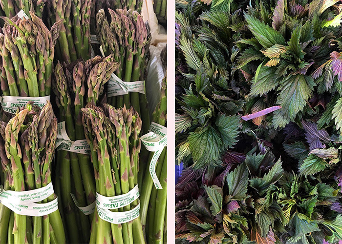 Asparagus and Nettles. Photos by Stephen Wade