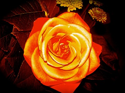 flower-michael-400x300.jpg