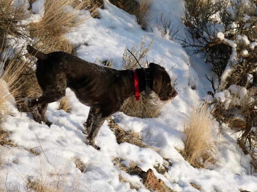 2012 Huntings 175.JPG