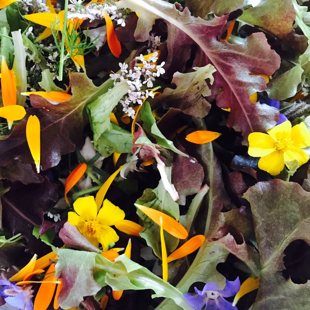 mesclun & bloemen.jpg