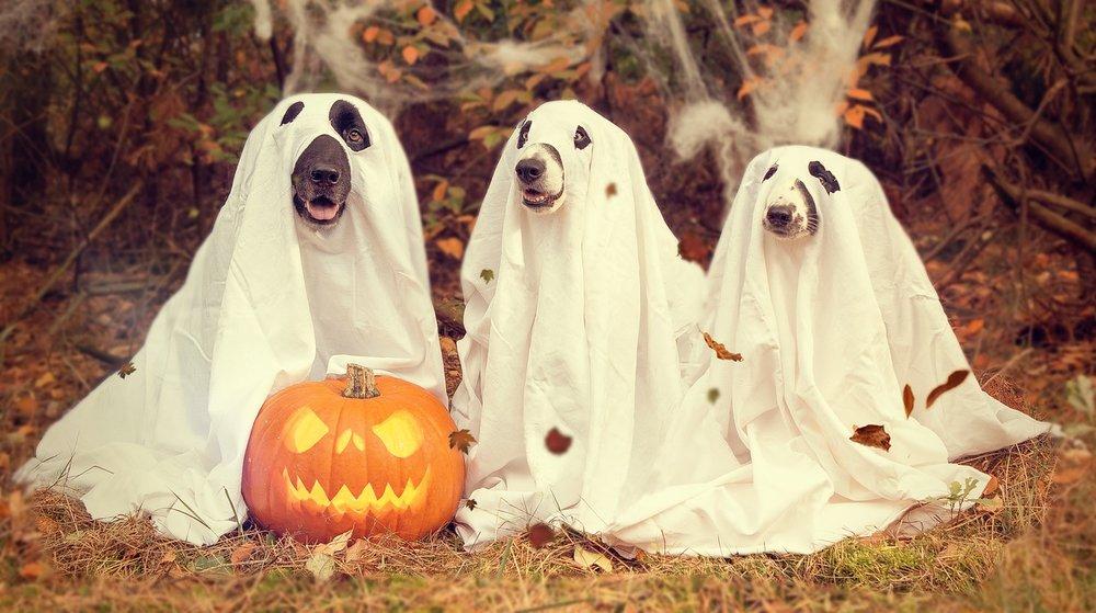 halloween irun