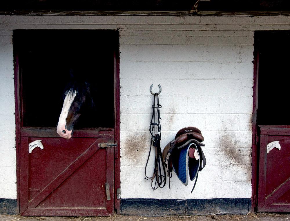 English and Horse-Riding - Horses.jpg