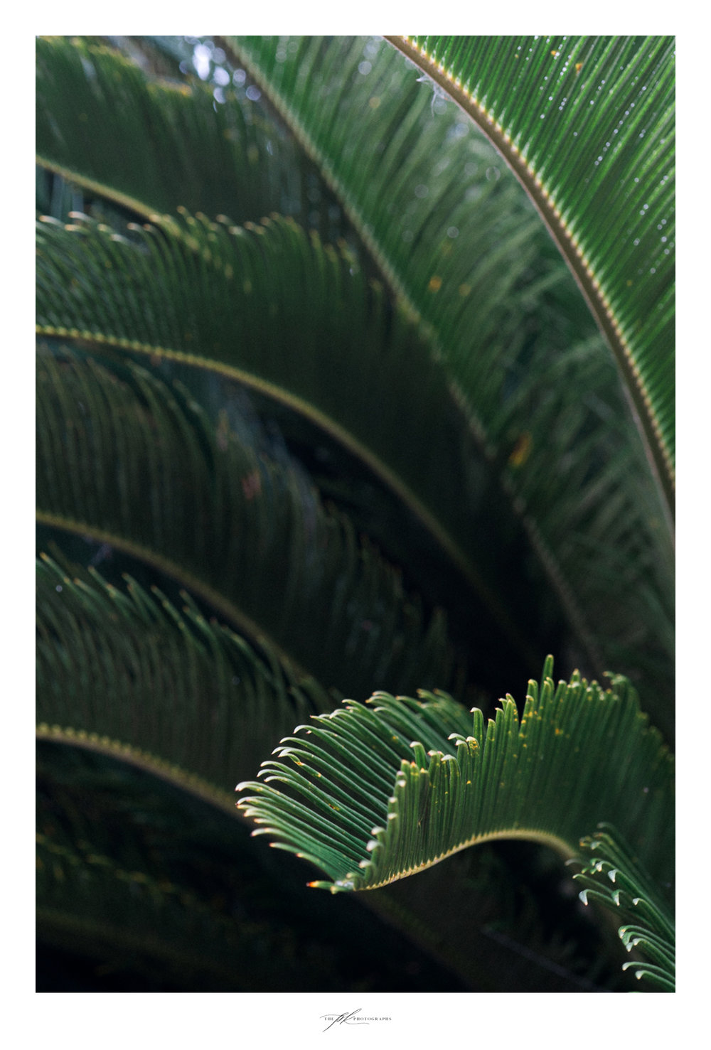 tree-texas-fern-leaves-up-close.jpg