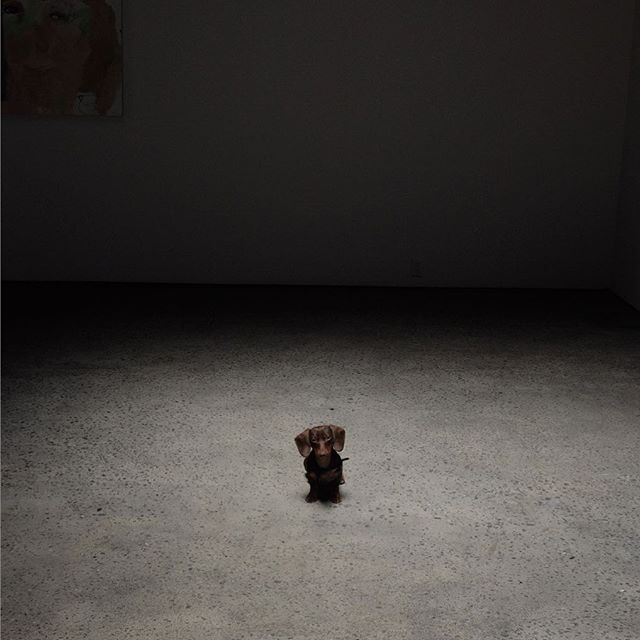 Gallery dog