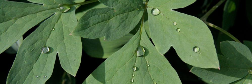 leavescrop.jpg