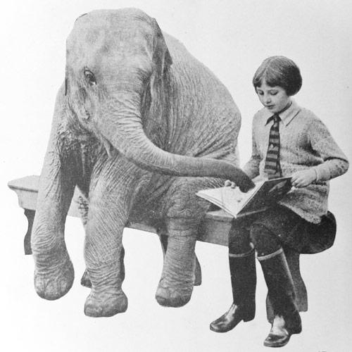 AK_ElephantReading