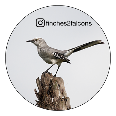 For the birds, follow @finches2falcons on Instagram.