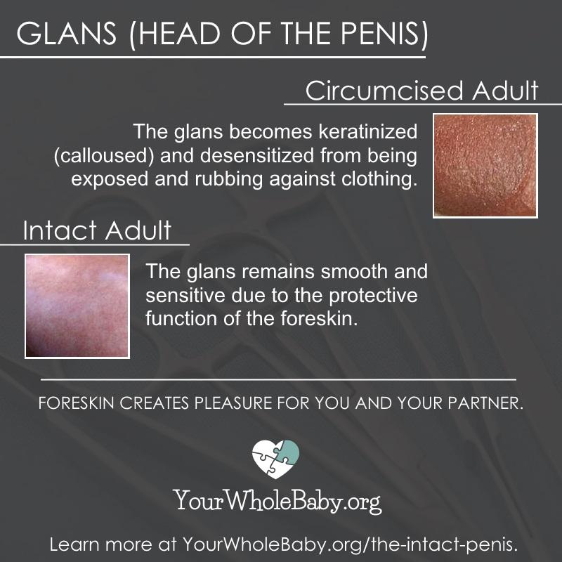 Desensitized penile nerves