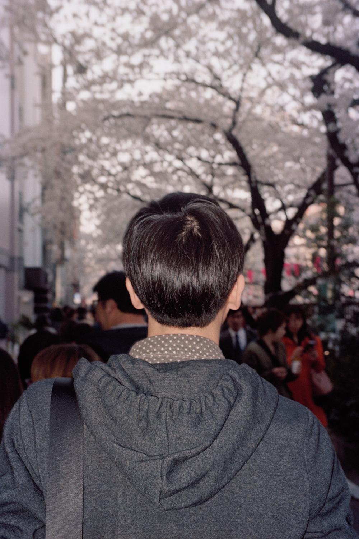 Untitled (Issei sakura)