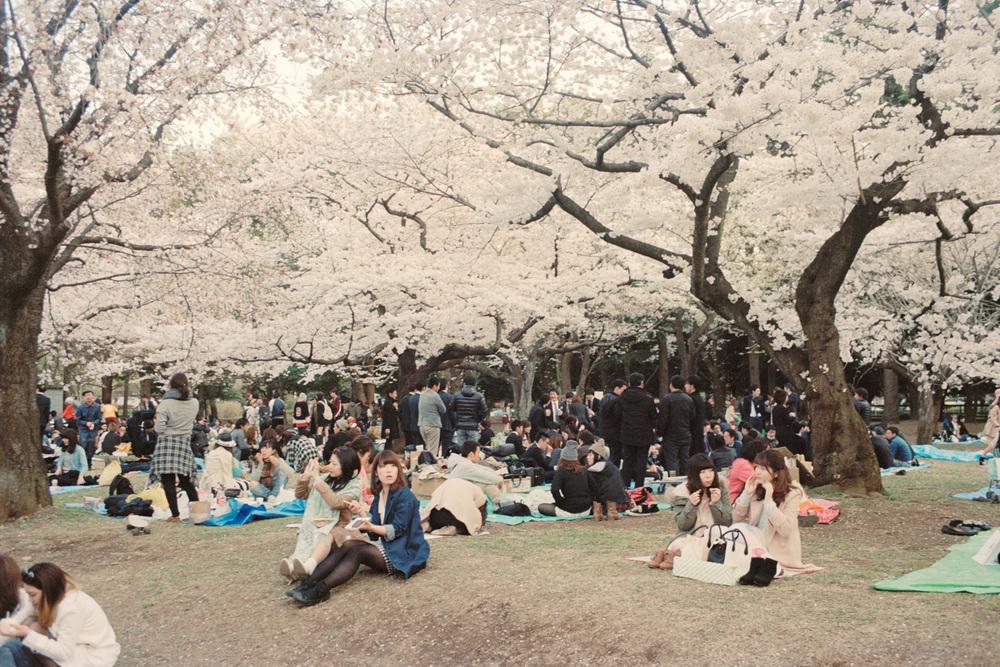 Untitled (Yoyogi Park hanami)