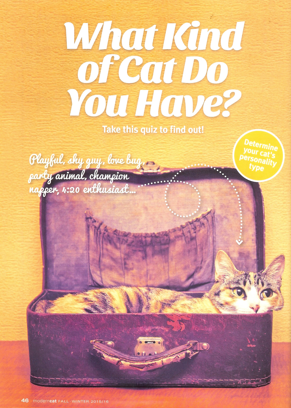 Modern Cat Fall 2015 article.jpg