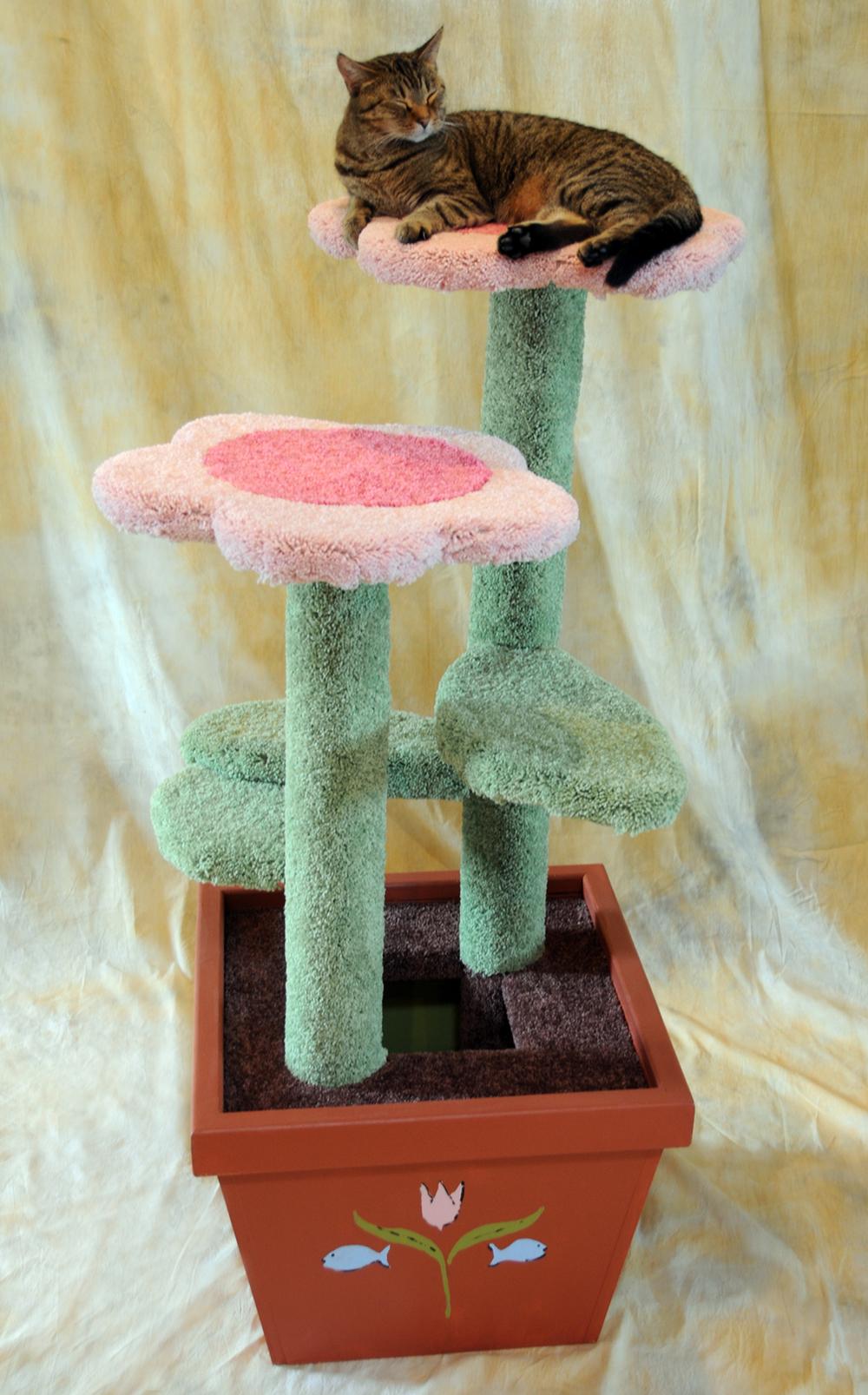 Pink Daisy Pot 009.JPG