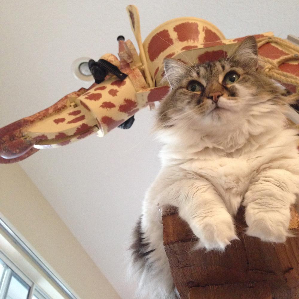 sq-paws-giraffe-buttercup-004.jpg