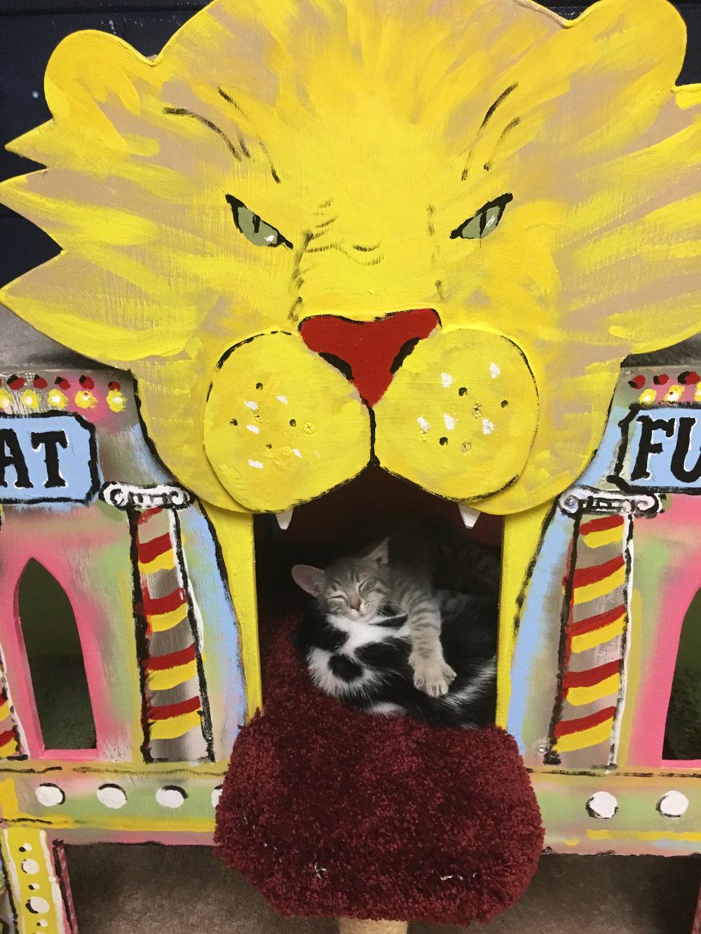 sq-paws-sacc-carnival-013.jpg
