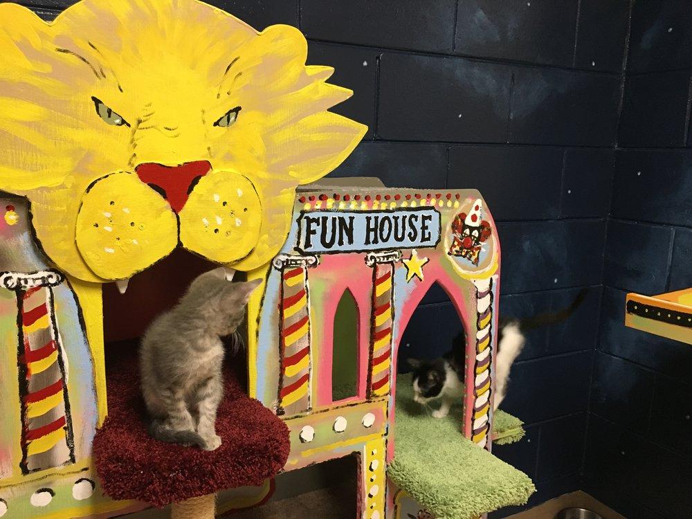 sq-paws-sacc-carnival-018.jpg
