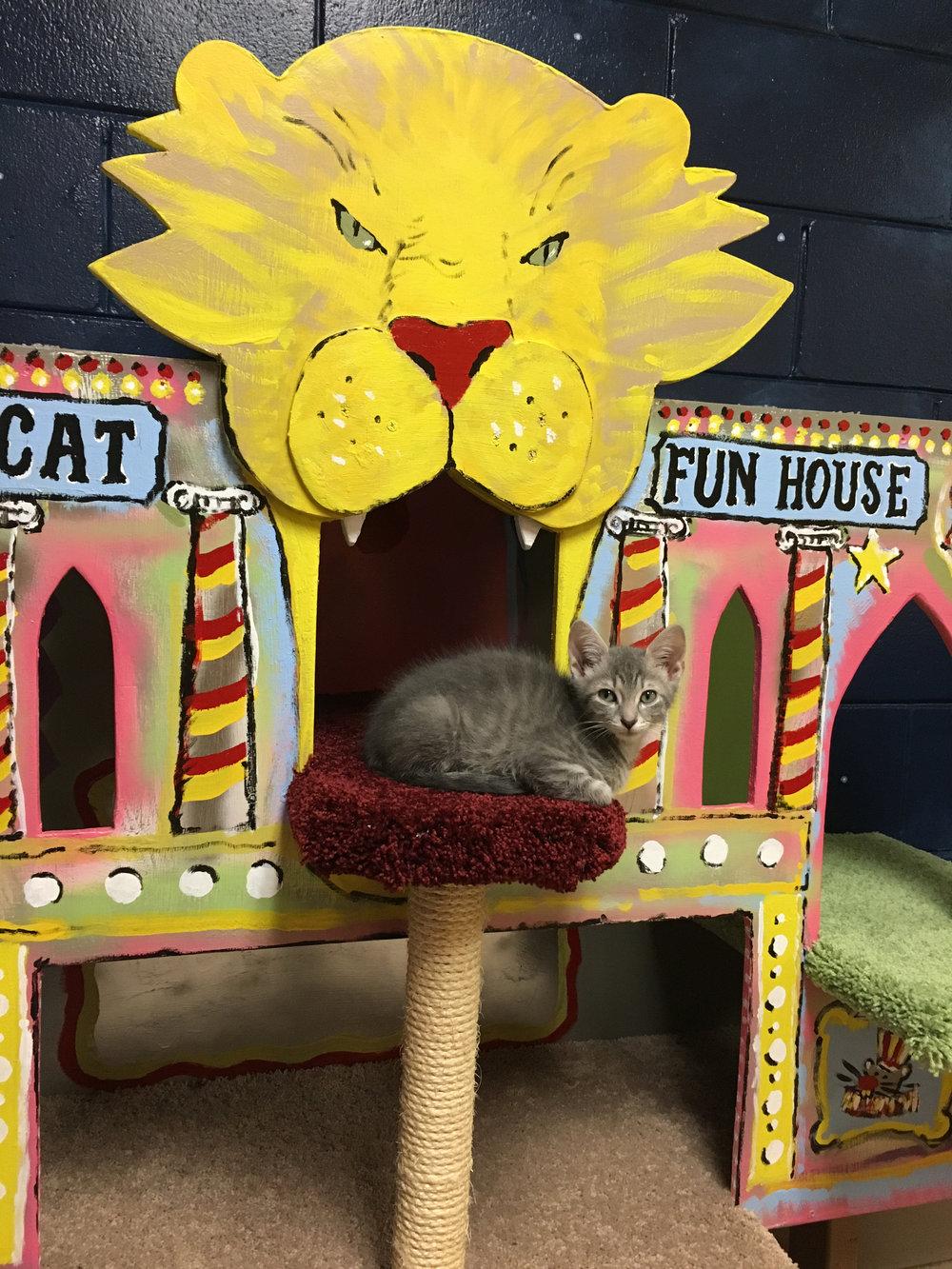 sq-paws-sacc-carnival-021.jpg
