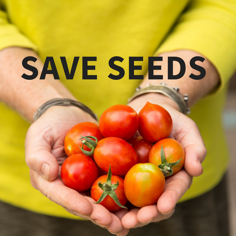 How to save tomato seed