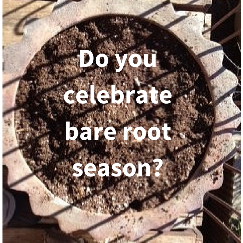 Cash in on bare root season