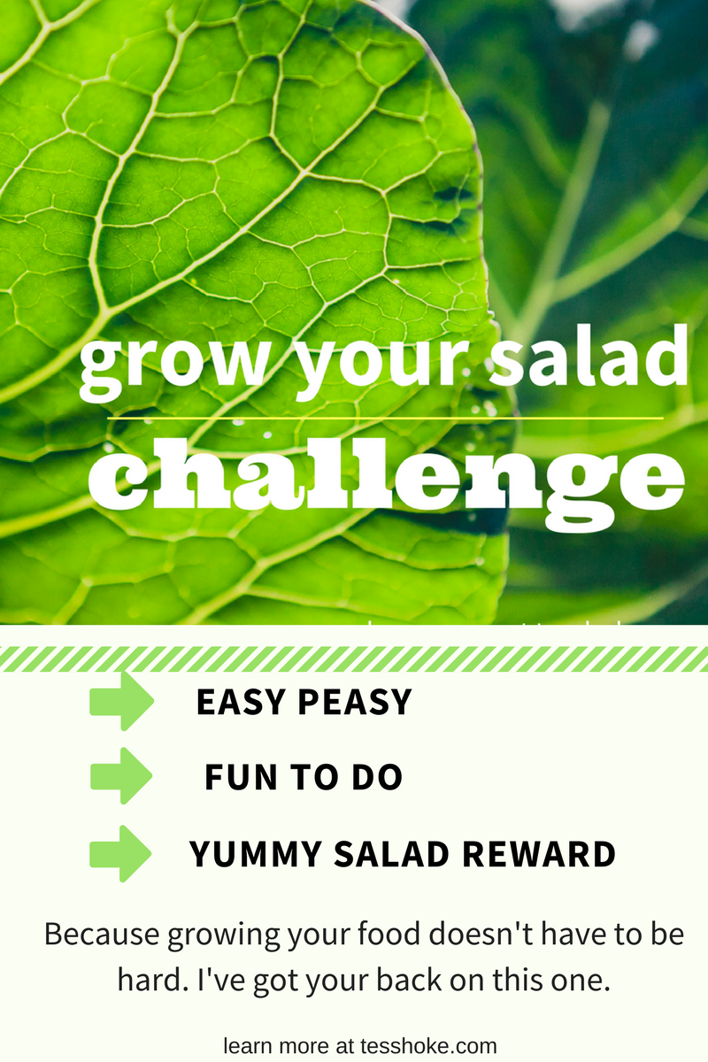 grow your salad