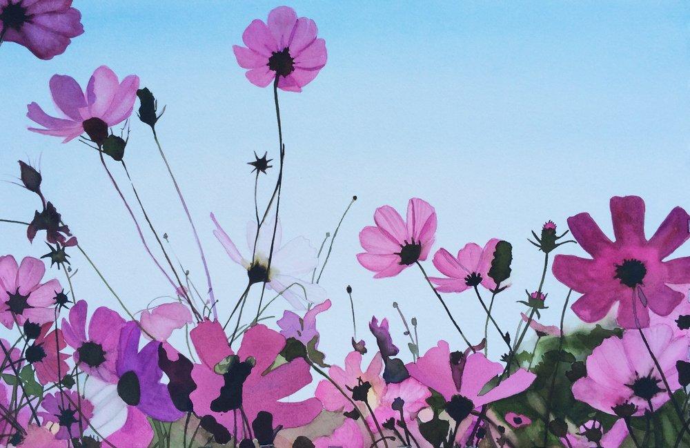 Pink Cosmos 14 x 21.jpg