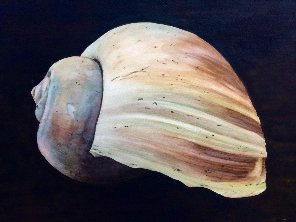 Seashell 11 x 15.jpg