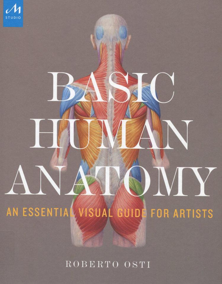 Basic Human Anatomy Alex Escobar Art Animation