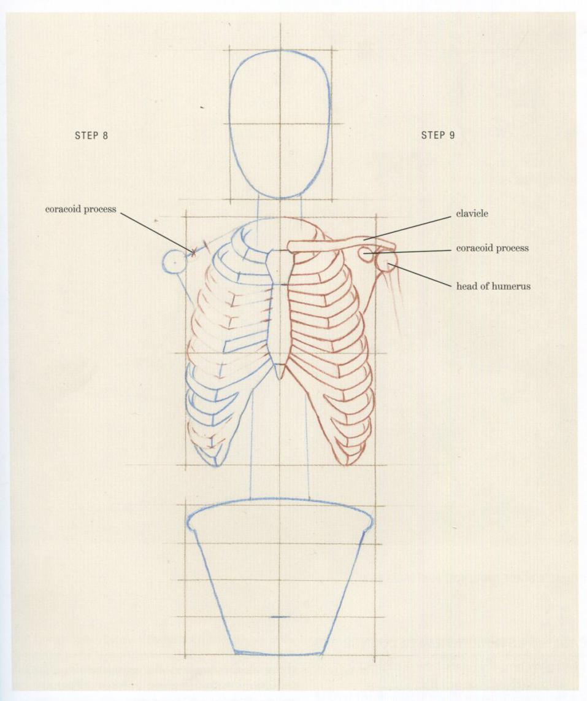 The Structural Skeleton — Alex Escobar | Art & Animation