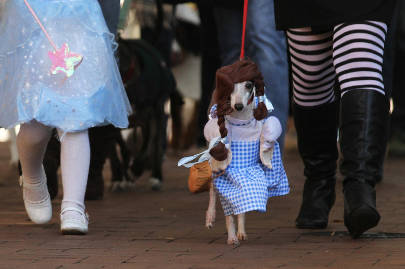 Dorothy, played by Rocko Henson, walks in the costume parade between Glinda the Good Witch of the North and The Wicked Witch of the West as part of the 4th Annual Doggie Howl-O-Ween event on the Downtown Mall in Charlottesville, Va. Sunday, Oct. 30, 2011. Copyright: The Daily Progress