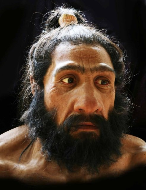 A hyper-realistic bust of a Neanderthal. Apparently man-buns were in back then.
