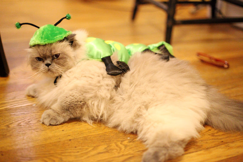 I suffered in silence as I contemplated on how to get this costume off.