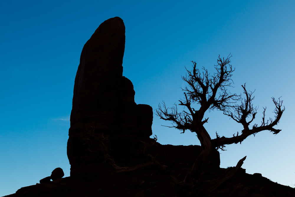 Silhouette of rock and tree.jpg