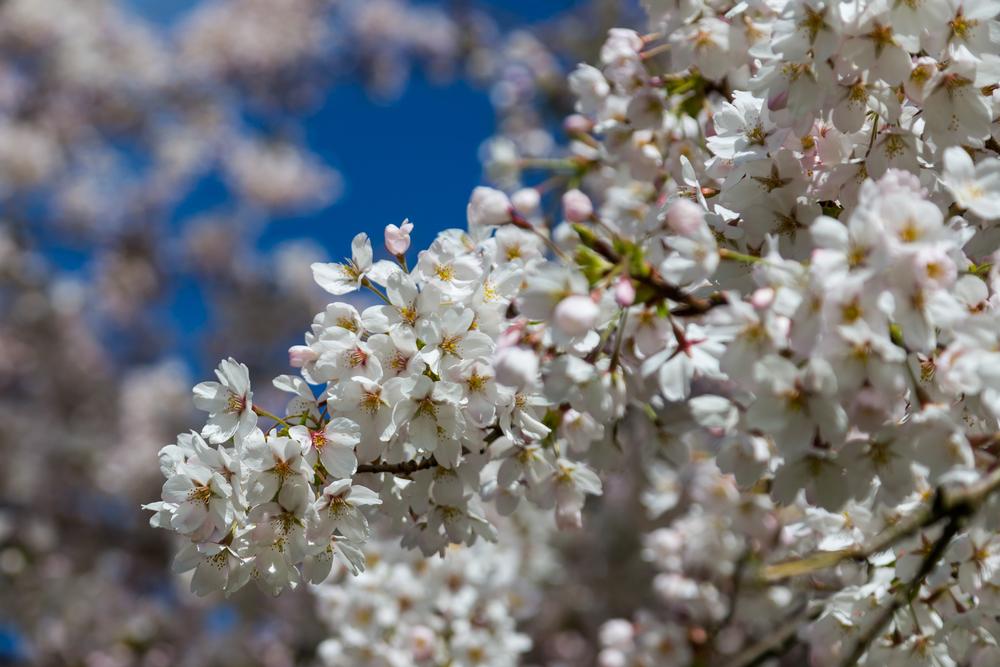 Rich blossom.jpg