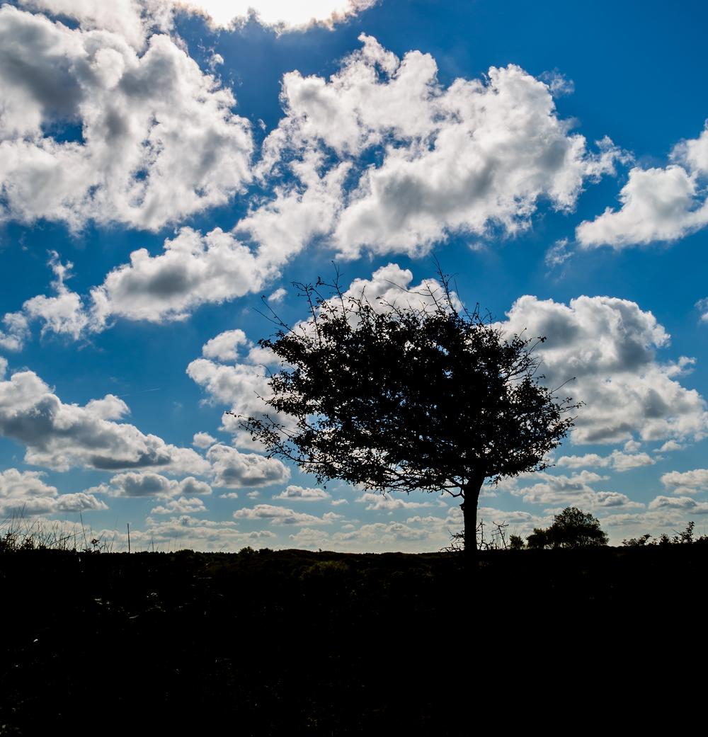 wind shaped.jpg