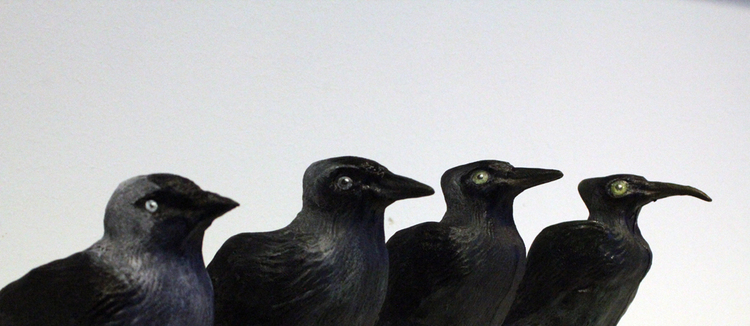 Field, 2015.     *Mutations of Eurasian Jackdaw (Corvus Monedula), in a gradual shift over 4 sculpture iterations. Eyes enlarged for better sight as ash clouds cover the sun, legs elongated as habitats are flooded, colour slowly changing to dark green for protection in new swamps, as they become land bound. Beak elongated as feeding habits change.