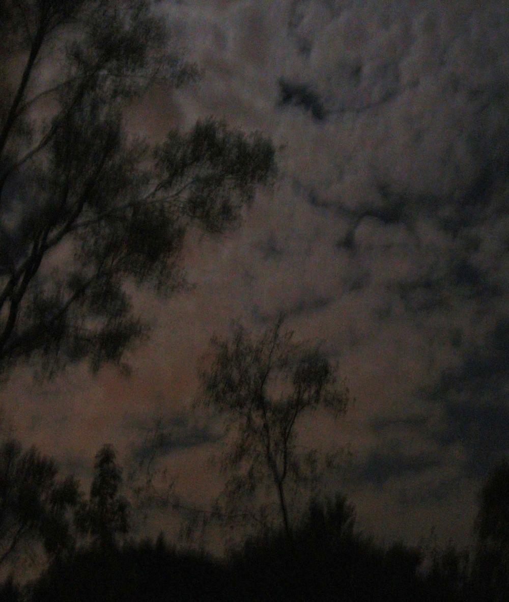LZ MOONLIT TREES - POPE JOAN.CH. 8 - 402K - LIGHTEST.JPG